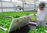 中国/日本/美国/荷兰/韩国植物工厂对比:我国未来规模达日本10倍以上