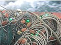 绿色LED嵌入式渔网可以使绿海龟的死亡率减少64%
