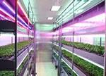 紫外光在植物工厂中分布特征及应用前景