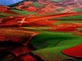 我国农业土壤及主要农产品重金属污染现状及发展趋势