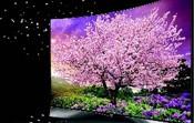 OLED有机电视销量猛增 称雄高端电视市场