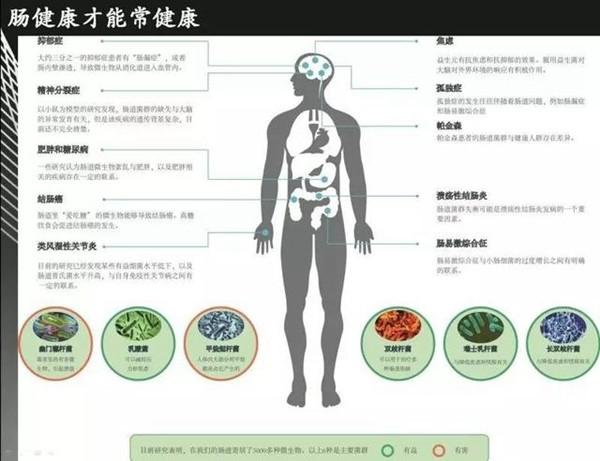 肠道医疗图标素材