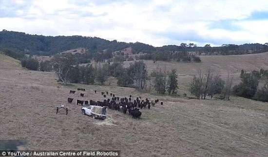 机器人将取代农民牧民 放牧采摘啥都能干