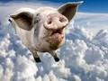 """养殖污染让""""二师兄""""价格飞上天 环保要求提升养猪""""门槛"""""""