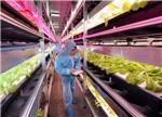 LED植物照明市场:低调中绽放