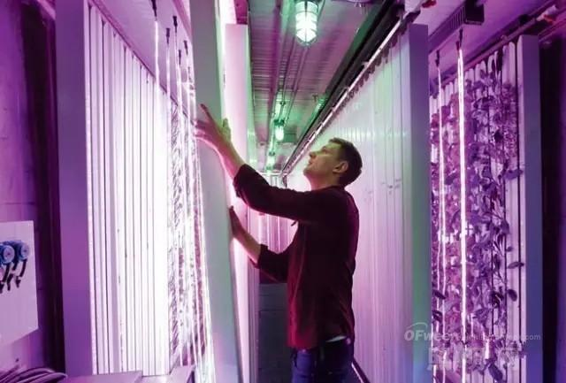 国内外LED植物工厂发展情况如何?