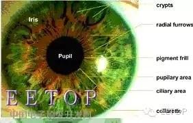 解析三星Note7虹膜识别的工作原理
