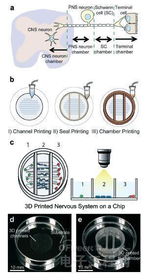 3D打印神经系统芯片