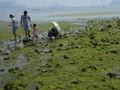 环境污染悬疑案:青岛黄海绿潮历经8年未解之谜