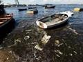 """里约奥运会槽点:""""超级细菌""""之水污染事件(图)"""