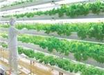 植物工厂?何不从植物工场开始?