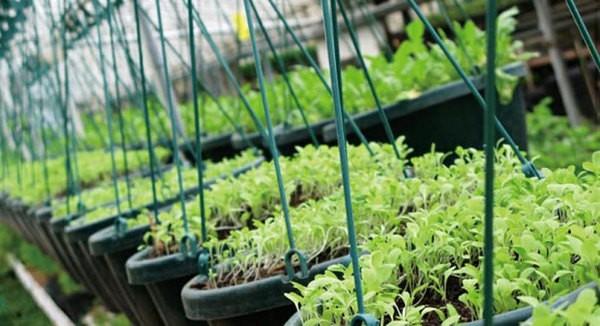 专用传感器助推农业物联网发展