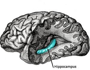 你相信吗:借助医疗大脑芯片能让你瞬间变聪明