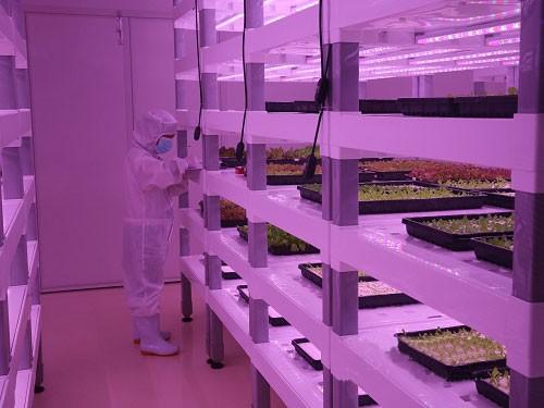 国内LED植物照明工厂一览
