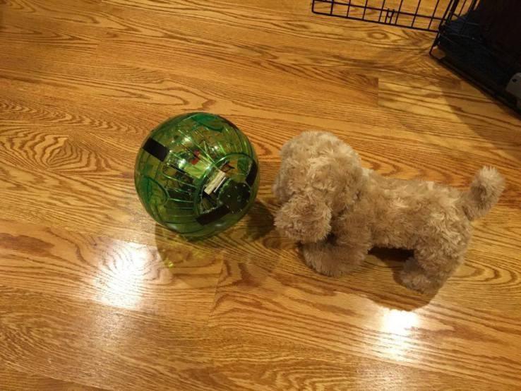 中秋出游 让这款Doge Ball陪伴你家宠物吧