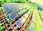 【涨知识】光伏农业:12大模式+4大技术优势+5大瓶颈+3大发展优势 你知道几个?