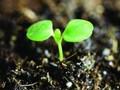 从三家土壤修复上市公司的经营情况看市场前景