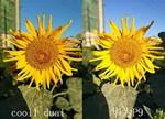 华为P9与cool1生态手机评测:双摄哪家强?