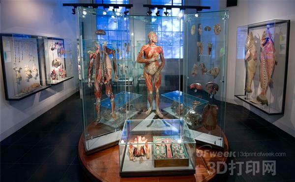 世界首个被应用到手术中的3D打印心脏模型将永久存于Boerhaave博物馆
