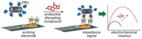 ACS Cent Sci:开发出细菌传感器检测内分泌干扰物