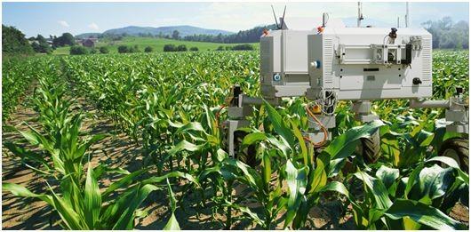 机器人抢了农民的活 挤奶的工作都不放过