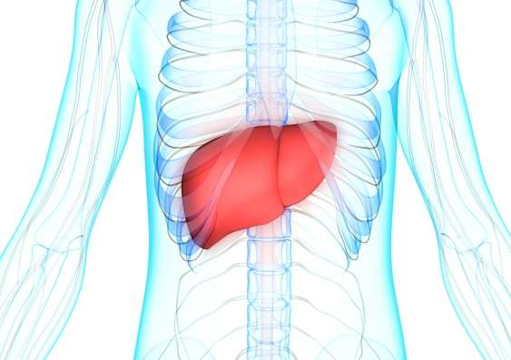 肝癌的致命性在于细胞代谢使其扩散加快