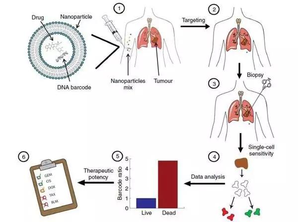 DNA条形码纳米颗粒可快速预测抗癌药物