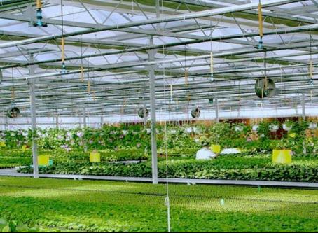 农业物联网引领农业现代化建设