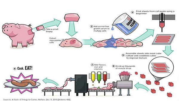 图3: 3D 打印肉流程示意图 首先,提取猪身上的细胞,利用3D 打印技术完美的模拟出肉组织细胞的分布结构。比如,肉中的软骨支架,血管,不同部位不同类型的细胞分布等。 其次,3D打印的微型细胞结构,在模拟的跟动物身上完全一样的环境下,进行自然分化(这样欺骗细胞真的好吗?)。例如,五花肉细胞就完全模拟五花肉的受力情况以及结构。 最后,微型细胞结构开始从肉细胞长成肉块,成熟后直接做成香肠,肉排等。想吃五花肉就打印五花肉的结构,肥瘦相间,完美五层。想吃猪脚就打印猪脚,从此还省了啃骨头的苦工。是不是很方便,是不