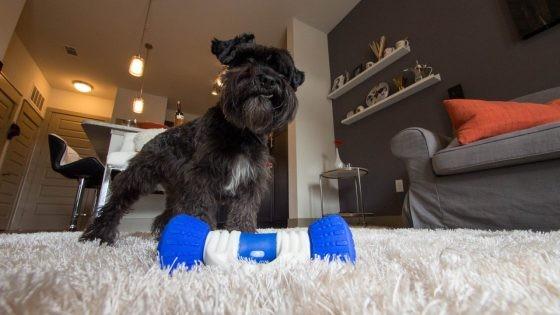 听说别人家的狗狗已经有这些高科技玩具了