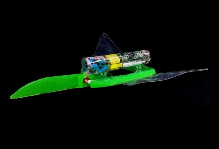 浙江大学开发出可在水中快速移动的软体电子鱼