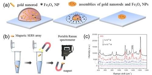 磁性拉曼检测芯片问世 可用于食品安全和环境监测