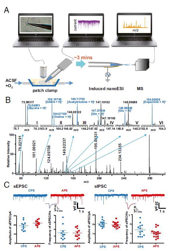 中国科大熊伟教授:质谱技术让神经化学进入单细胞时代