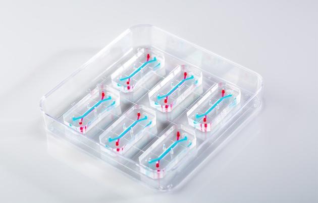 FDA正式开始人类肝脏芯片试验