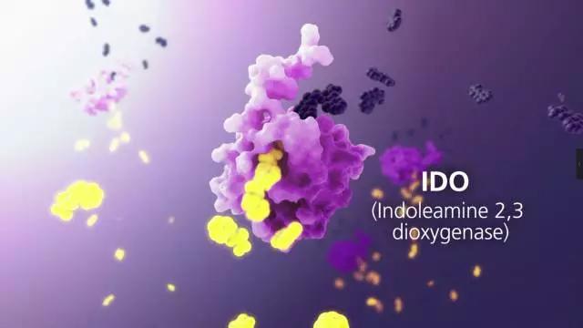 IDO抑制剂成免疫治疗巨头哄抢对象