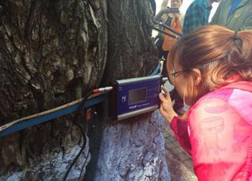 传感器技术在大树健康情况检测中的应用
