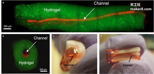 3D生物打印对根管治疗产生积极影响