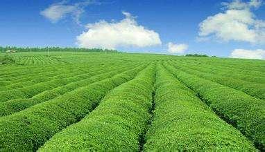智能农业项目无锡开园:产量增三成