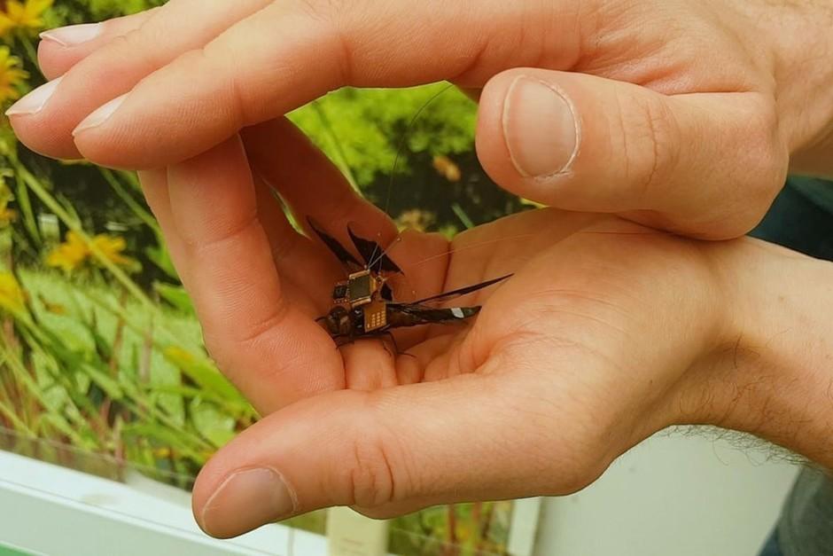 """图集:蜻蜓变身微型无人机 动物""""强化""""引争议"""
