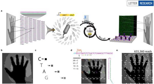 DNA测序或能像硬盘一样存储信息