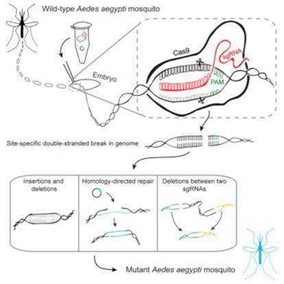 当进化与生物技术相碰撞时,我们该何去何从?