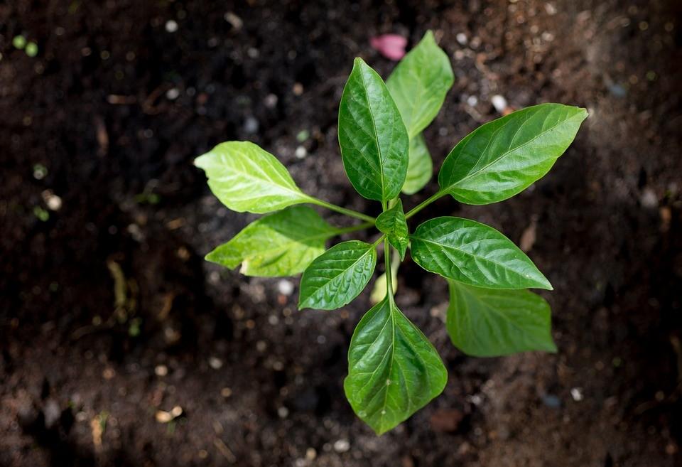 环保部联合四部委联手展开全国土壤污染状况详查