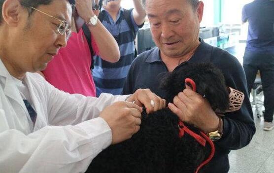 """电子芯片用于管理 青岛2122只宠物犬拥有特殊""""身份证"""""""