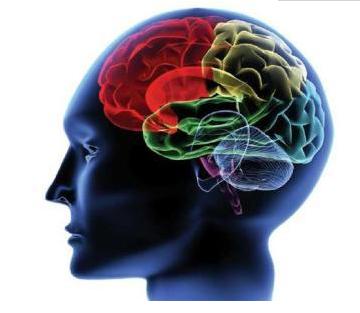 """用算法分析图像,实现对神经元行为的精准""""录像""""研究"""