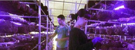 LED光能整体技术助力精准扶贫