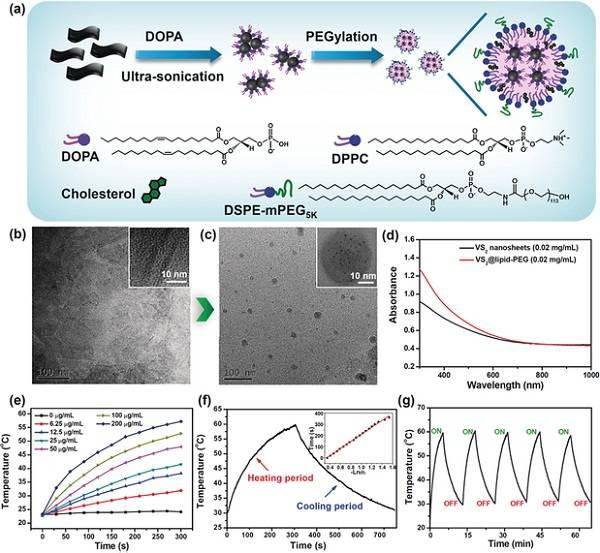 苏州大学刘庄Angew. Chem. Int. Ed.:可生物降解的多功能无机纳米肿瘤诊疗试剂
