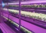 智能照明/植物照明/激光照明等技术应用2016年总结