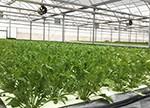植物工厂盈利难 植物照明何去何从?