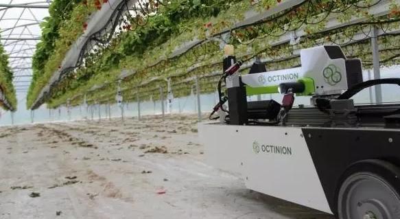 机器人能用机器视觉摘草莓 还能看出熟不熟