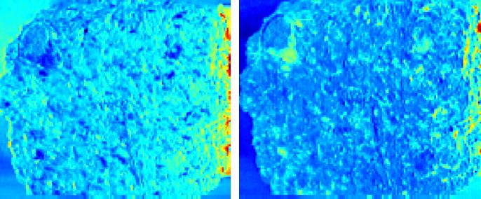 高光谱成像技术对砾岩岩石的分析处理